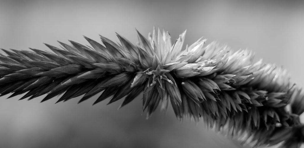 BW Flower Stalk RM