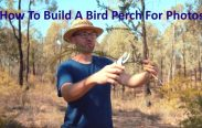 How To Build A Bird Perch Photography