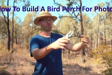 How To Build A Bird Perch Photography